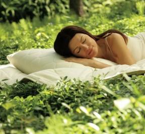 dormio_organic_beds_directory_2