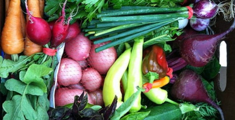 backyard_groceries2